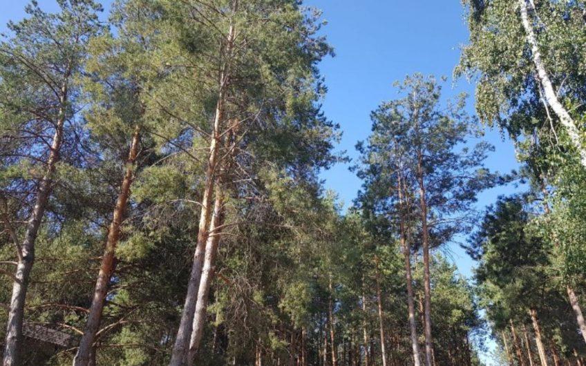 Продажа / Земля под инд. строительство / с. Процев