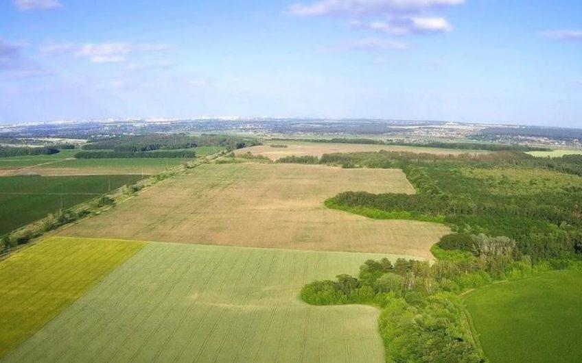 Продажа орехового сада 15 км от Киева